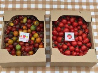 絶対おすすめ 同梱送料がお得 期間限定(6月下旬で栽培終了)ジュエリートマト&いちごトマト (各トマト1,5キロ 120粒〜180粒程度)