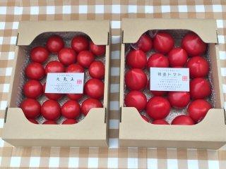 絶対おすすめ 同一梱包で送料がお得 期間限定(6月下旬で栽培終了)元気玉フルーツトマト&初恋フルーツトマト約3キロ程度 (各トマト約1,2キロ 10粒〜25粒程度)