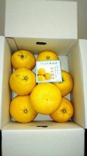 河内晩柑【ご家庭用】 10kg3L〜4L混合16〜19個