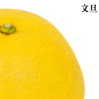 文旦【ご家庭用】 5kg L〜3L混合 9〜13個