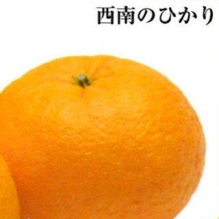 西南のひかり【ご家庭用】 7kg M〜2L 35〜55個