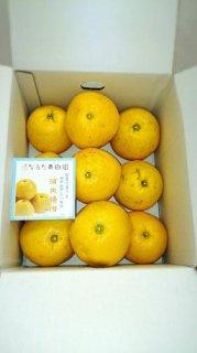河内晩柑【ご家庭用】 7kg 3L〜4L混合 11〜13個