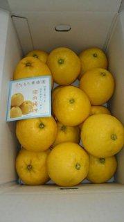 河内晩柑【ご贈答用】 7kg S〜M混合 18〜21個