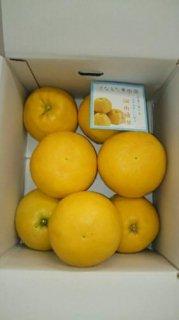 河内晩柑【ご贈答用】 5kg 3L〜4L混合 8〜9個