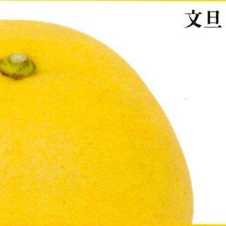 文旦【ご家庭用】 3kg  L〜3L混合 6〜8個
