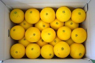 小夏【ご家庭用】 7kg M〜L混合 35〜42個
