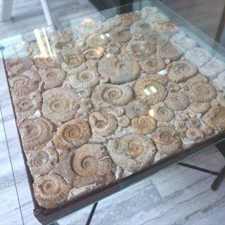 [30%OFF アウトレットSALE]1点もの!180億年前 アンモナイト化石 個性的 本物 ガラステーブル 幅55cm 奥行き55cm 正方形 高さ45cm イタリア アンモナイト化石テーブル