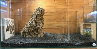 セレクト気孔石