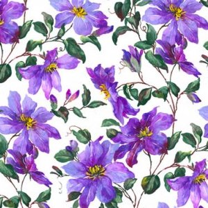 CLEMATIS (クレマチス)