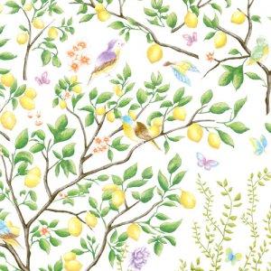LEMON TREES(レモンツリー)