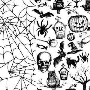 SPIDER WEB(スパイダーウェブ)