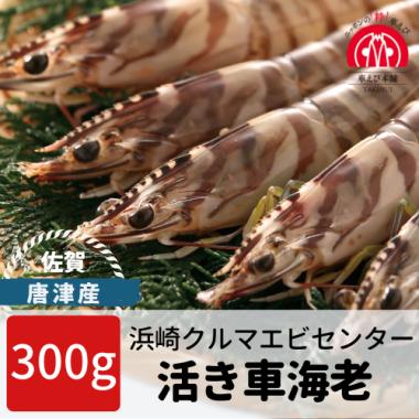 唐津産 活き車海老 300g(10-17尾)