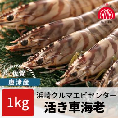 唐津産 活き車海老 1kg(33-50尾)