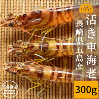 五島産 活き車海老 300g(10-18尾)