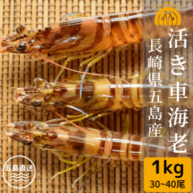 五島産 活き車海老 1kg(30-40尾)