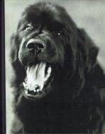 Gentle Giants: <br>A Book of Newfoundlands <br>Bruce Weber <br>ブルース・ウェーバー