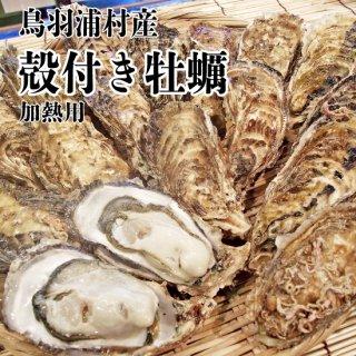 【冷蔵】鳥羽浦村産 殻付き牡蠣(30個) 加熱用