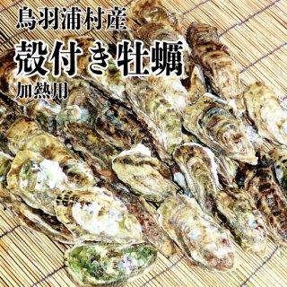 【冷蔵】鳥羽浦村産 殻付き牡蠣(40個) 加熱用
