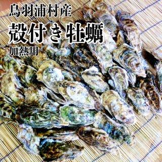 【冷蔵】鳥羽浦村産 殻付き牡蠣(50個) 加熱用