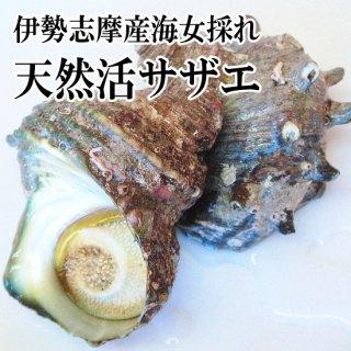 【冷蔵】海女採れ 活さざえ 約6個900g 大サイズ