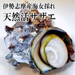 【冷蔵】海女採れ 活さざえ 1個350g 特大サイズ