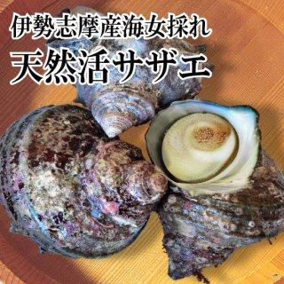 【冷蔵】海女採れ 活さざえ 約6個600g 中サイズ