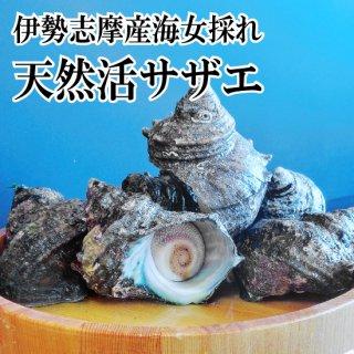 【冷蔵】海女採れ 活さざえ 約7個600g 小サイズ