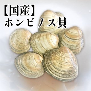 【冷蔵】国産 ホンビノス貝 9〜10個