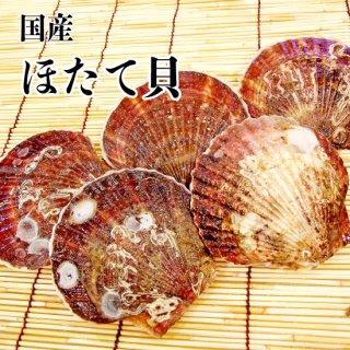 【冷蔵】ほたて貝 (5枚)