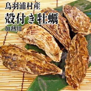 【冷蔵】鳥羽浦村産 殻付き牡蠣(5個) 加熱用
