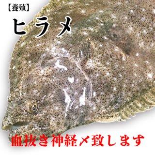 【冷蔵】ヒラメ(養殖) 800g〜