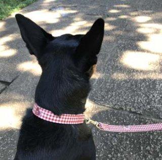 中型犬用ダークレッドギンガム