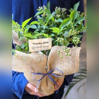 【父の日ギフト】目に優しいブルーベリーの鉢植え ※送料込