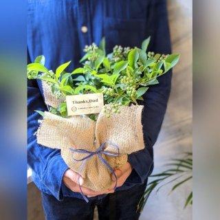 【父の日ギフト】目に優しいブルーベリーの鉢植え2種 ※送料込