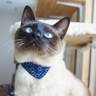 猫 首輪 バンダナ サークルドット ネイビー セーフティ猫首輪