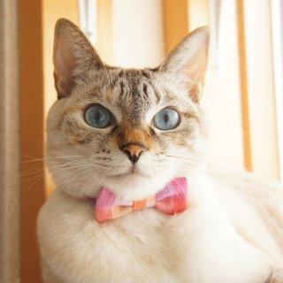 猫 首輪 リボン ブロックチェック ピンク セーフティ猫首輪
