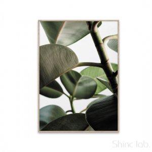 PAPER COLLECTIVE(ペーパーコレクティブ)フォトポスター 50×70cm グリーンホーム 03