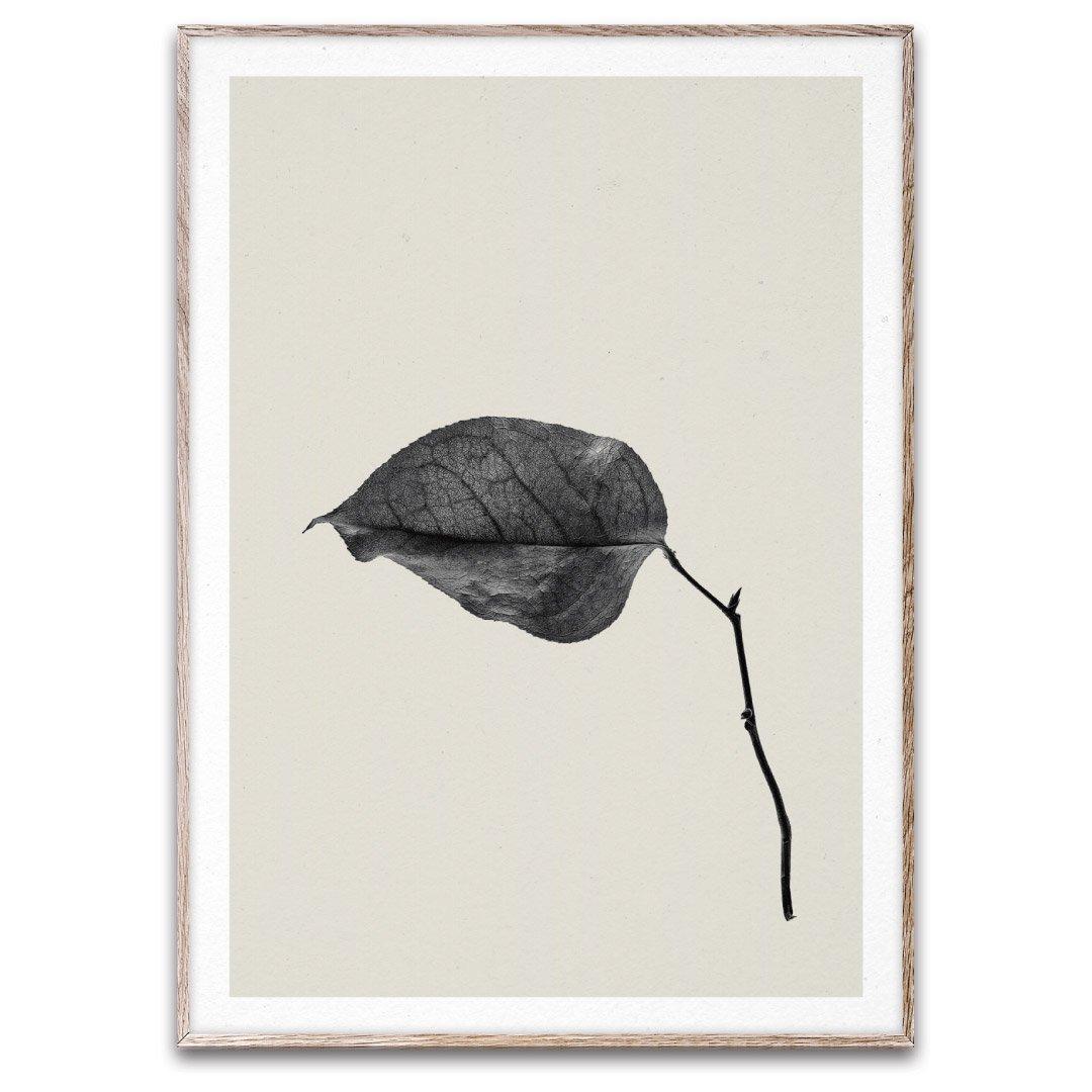PAPER COLLECTIVE(ペーパーコレクティブ)フォトポスター 50×70cm Sabi Leaf 03