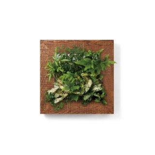 マイギャラリーM/チーク(トレー2段)