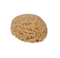 ギリシャ産 最高級天然海綿 ハニコム種
