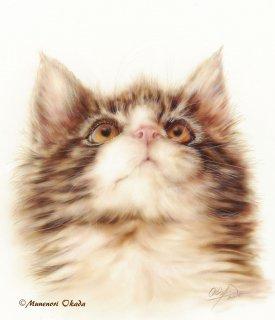 メインクーン Kitten