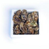 牡蠣殻付き20個