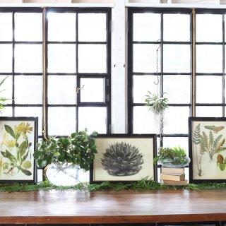PLANT FRAME Aの画像