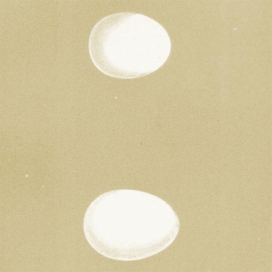 アンティークプリント フクロウの卵(SHORT-EARED/LONG-EARED)