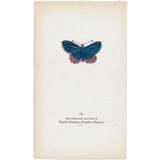 蝶々・バタフライプリントNo.38(Britain)