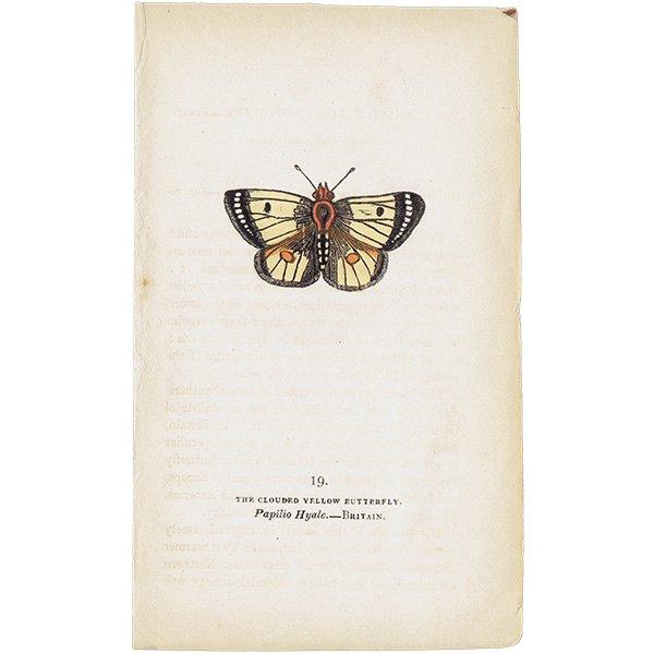 蝶々・バタフライプリントNo.19(Britain)