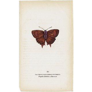 蝶々・バタフライプリントNo.30(Britain)