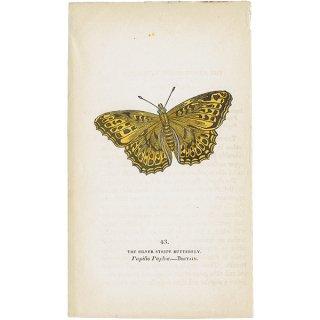 蝶々・バタフライプリントNo.43(Britain)