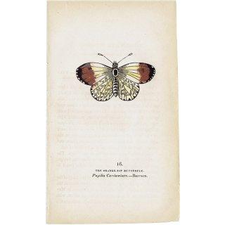 蝶々・バタフライプリントNo.16(Britain)