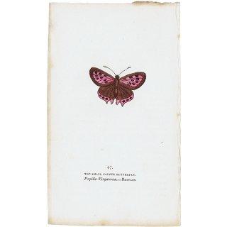 蝶々・バタフライプリントNo.47(Britain)
